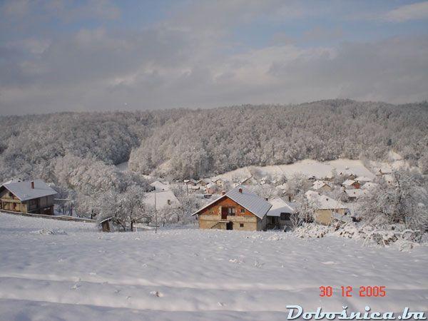 Dobosnica zimi